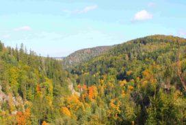 Höllental Wald in Herbstfärbung